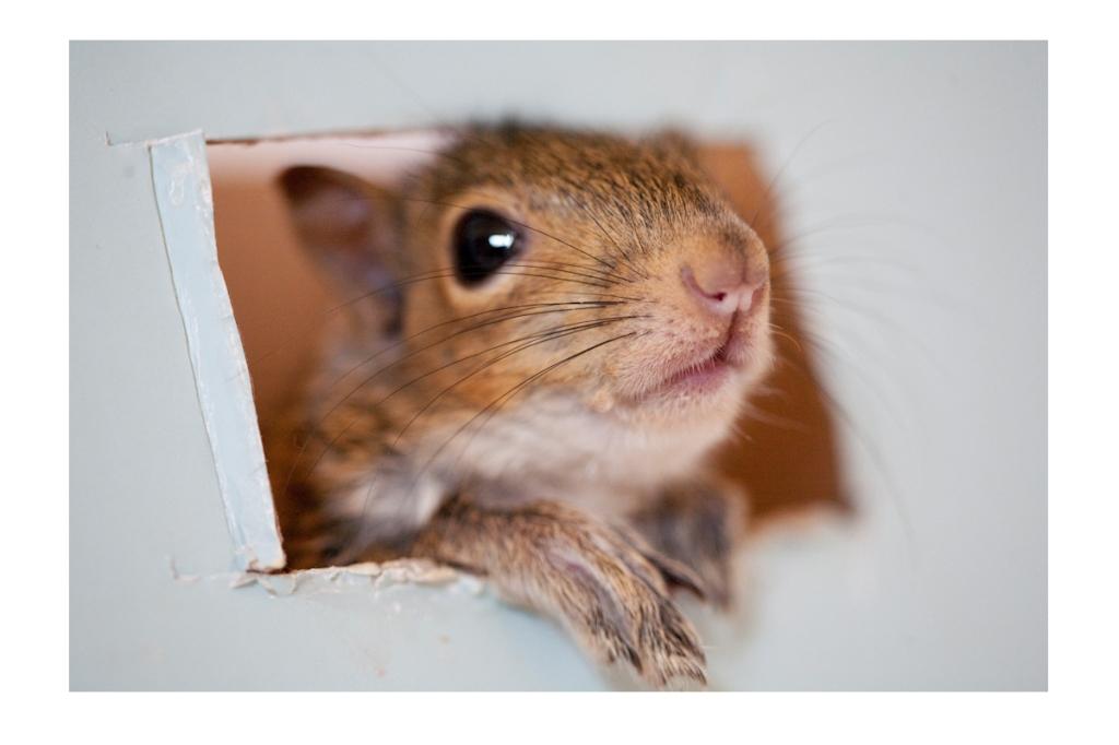 Pet squirrel, really?!